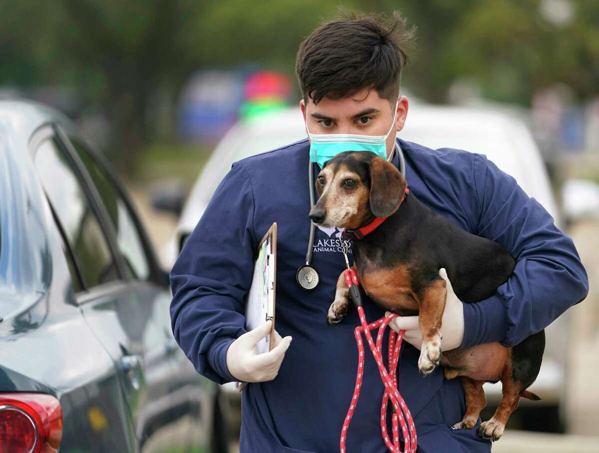 PHOTOS: How to help Houstonians in need during the pandemicVeterinarian experts are starting to uncover new information in regard to the impact the novel coronavirus may have on pets and animals. >>>See more for how to help Houston during the pandemic...