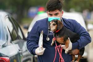 Shawn Smith, vet tech, takes a dog named Lucky from its owner's vehicle into Lakeside Animal Clinic, 2501 S. Kirkwood Rd., for an exam Tuesday, March 24, 2020, in Houston. To reduce the spread of COVID-19 the vet office is having people wait in their vehicle.  A vet tech in personal protective equipment takes the animal in and out of the clinic.
