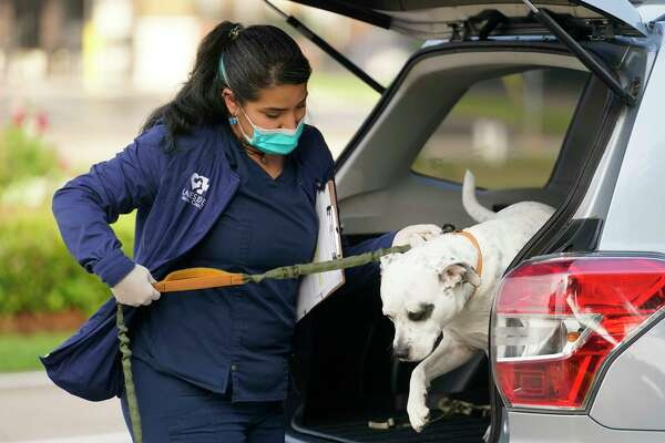 Karla Enriquez, vet tech, takes a dog named Hank from its owner's vehicle into Lakeside Animal Clinic, 2501 S. Kirkwood Rd., for vaccinations Tuesday, March 24, 2020, in Houston. To reduce the spread of COVID-19 the vet office is having people wait in their vehicle. A vet tech in personal protective equipment takes the animal in and out of the clinic.