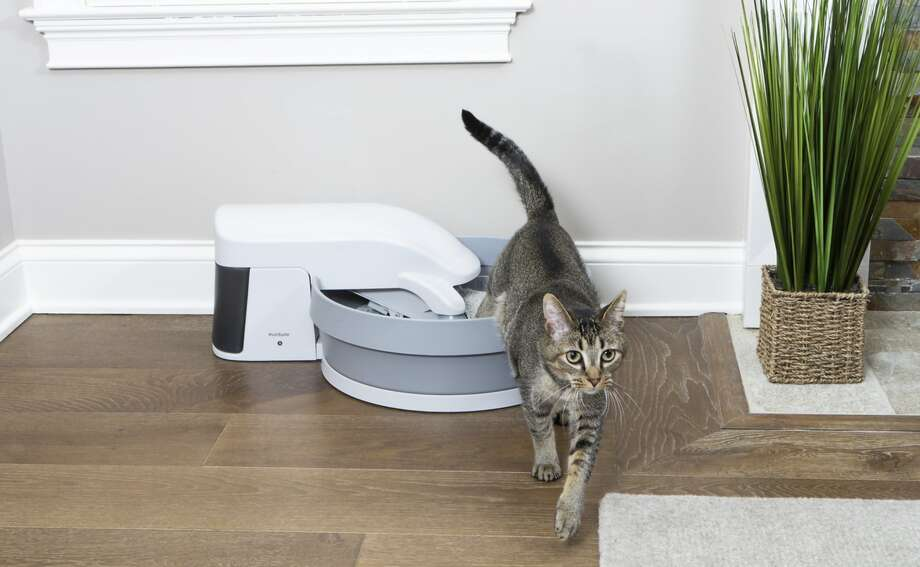 PetSafe Simply Clean Self-Cleaning Litter Box, $95.99 Photo: Chewy