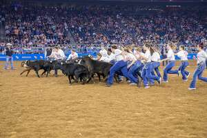 Calf scramblers compete during the 2020 Houston Livestock Show and Rodeo