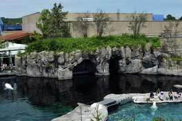 Mystic Aquarium, seen here, is offering live Facebook events daily at 11 a.m., featuring species from beluga whales to green moray eels. The Maritime Aquarium at Norwalk is also holding live Facebook Q&As on a variety of subjects; they take place daily at 3 p.m.