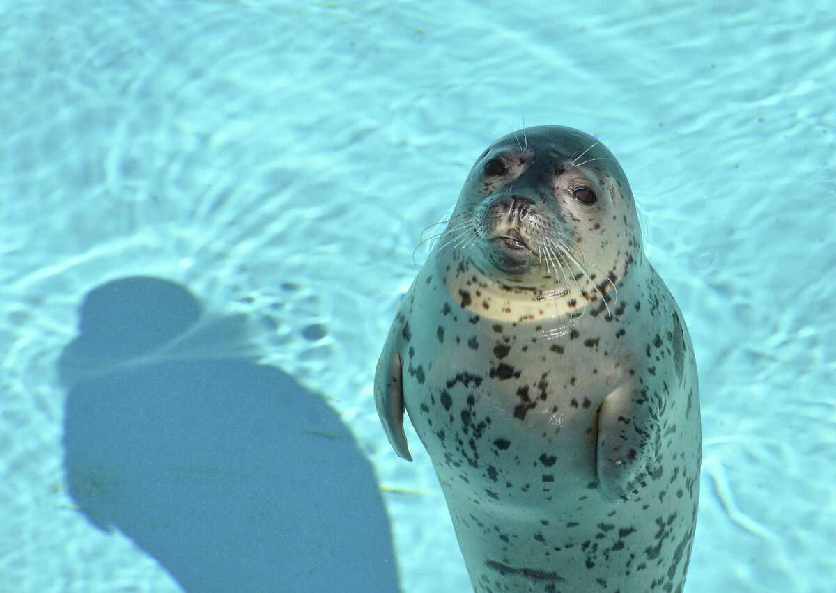 New friends, such as this seal, await at Mystic Aquarium. Make it a day trip and you'll get to meet all kinds of creatures - from beluga whales to a green moray eel.