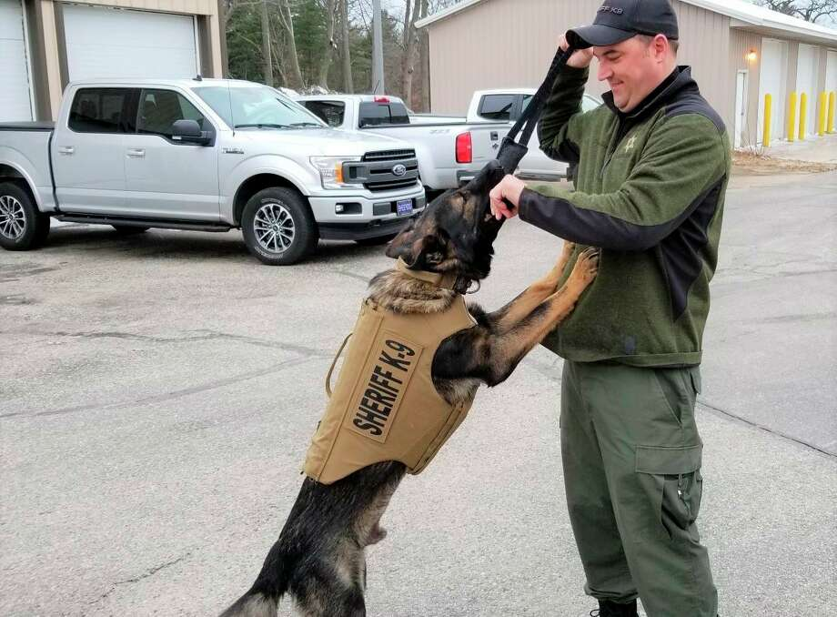 Manistee County Sheriff's Office K9, Faro, is shown with a new vest that was donated and he is pictured alongside handler Deputy Brandon Gillispie. (Courtesy photo)
