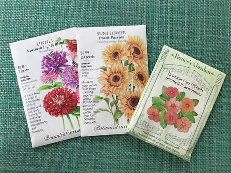 Seeds to plant in the Houston area now for blooms this summer include zinnia, sunflowers and four o'clocks.