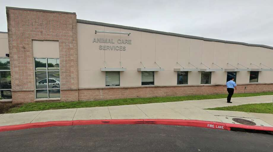 """As of Wednesday, ACS has stopped the public intake of dogs and cats at its campus at 4710 State Highway 151 due to the """"Stay Home, Work Safe"""" order that was placed to slow the spread of the coronavirus. Photo: Google Maps"""
