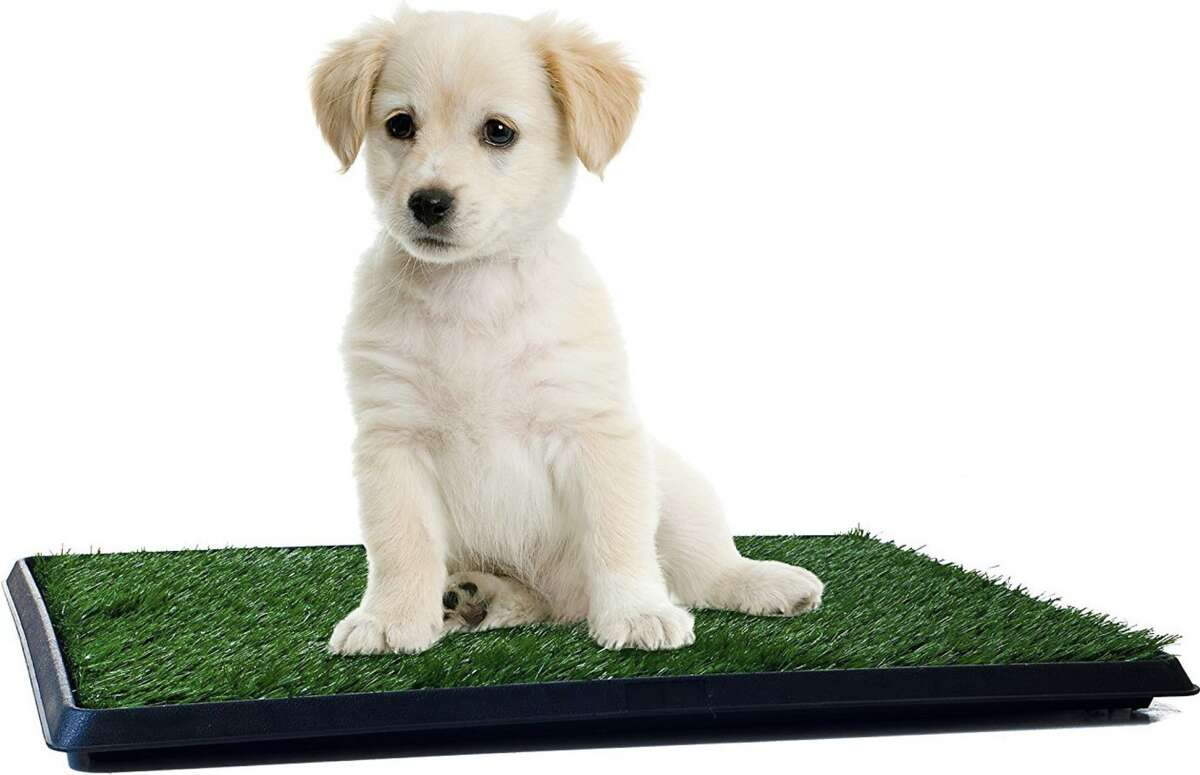 Petmaker Indoor Restroom Puppy Potty Trainer, Starting at $18.94 on Chewy and $17.22 on Amazon