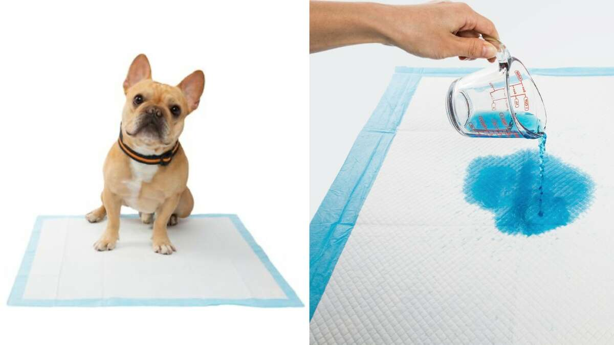 Frisco Training & Potty Pad - 100 Count, Starting at $22.79
