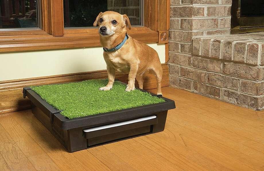 PetSafe Pet Loo Portable Inner & amp; Pot pour chien d'extérieur, à partir de 69,95 $ Photo: Chewy