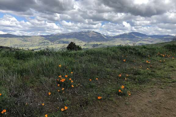 Poppies on Our Hills