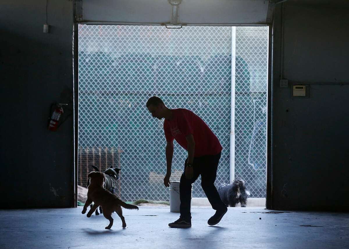 MIchael Delano exercises dogs at K9 Playtime doggie daycare in San Francisco, Calif. on Thursday, March 26, 2020.