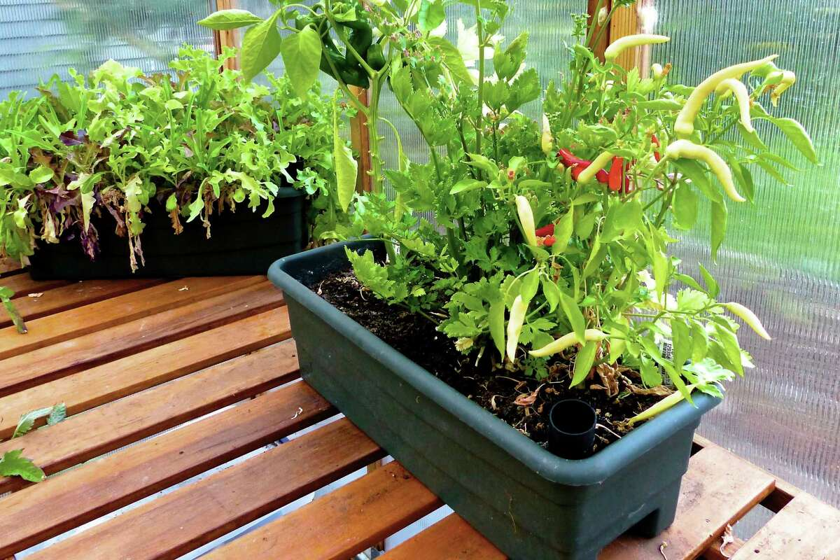 Start gardening indoors: Starting crops from seedlings gives your garden a head start and now is the perfect time to get going. The Old Farmer's Almanac offers a wealth of information including tips and a handy planting calendar. if Creating a container garden is also a great option if you have limited sun. Peter Bowden, well-known Capital Region gardener and spokesperson for Hewitt's offers some advice.