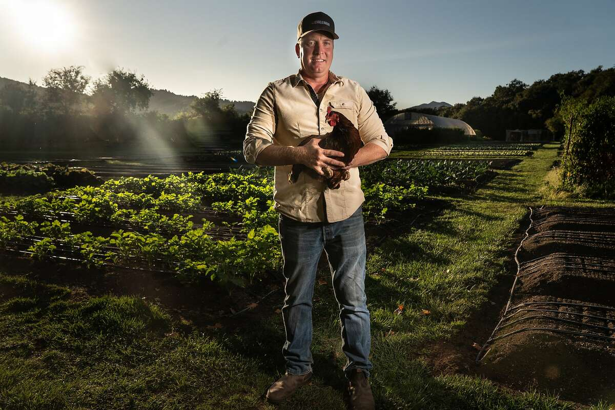 French Laundry gardener Aaron Keefer holds a Rhode Island Red hen from the chicken coop on Saturday, Oct. 5, 2019, in Yountville, Calif.