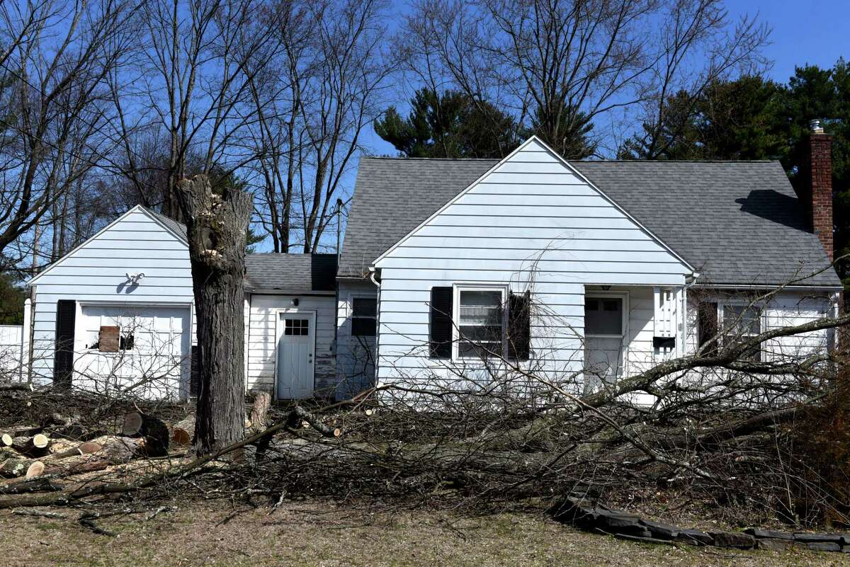 Trees are felled along Rielton Ct. as plot of land on Western Avenue near Rapp Road is cleared for construction of a planed Costco store on Friday, March 27, 2020, in Guilderland, N.Y. (Will Waldron/Times Union)