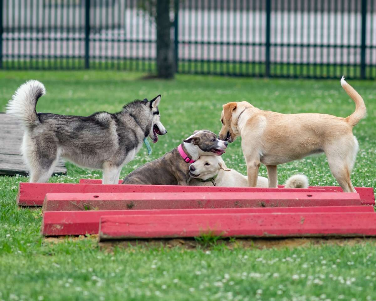 Dog parks - Back to normal Bias said he thinks people will start using dog parks and walking trails when restrictions lighten as there is little evidence to show that the virus would be passed from dog to dog or dog to human. It will be the humans that maintain distance at the park.