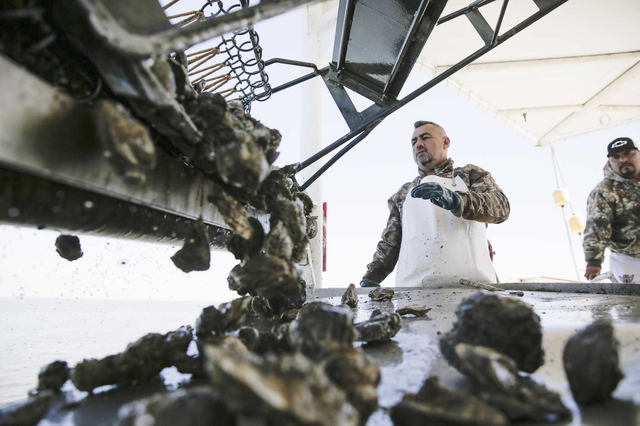 Oysters in Galveston Bay are on the rebound. Will it stay that way?