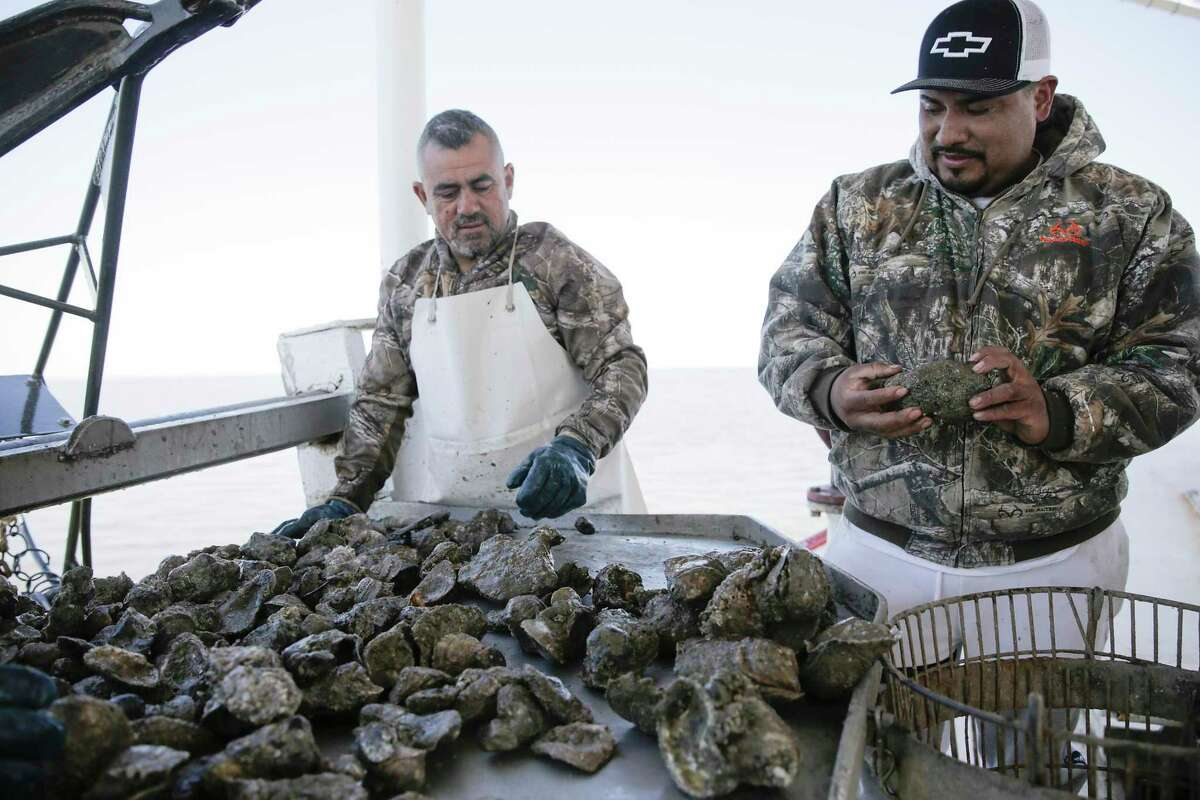 Prestige Oysters employees Jaime Martinez, left, and Joaquin Padilla talk about how they seed and harvest in Galveston Bay.