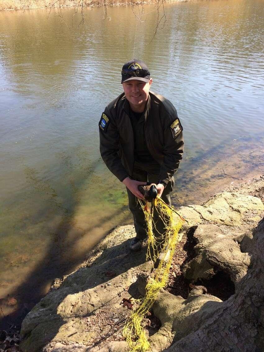 A mallard was found pierced by an arrow in Washington Park.