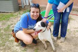Houston resident Gretchen Bella with her foster dog Bortus, a two-year old male American bulldog who was surrendered at the HCAS shelter on March 21.
