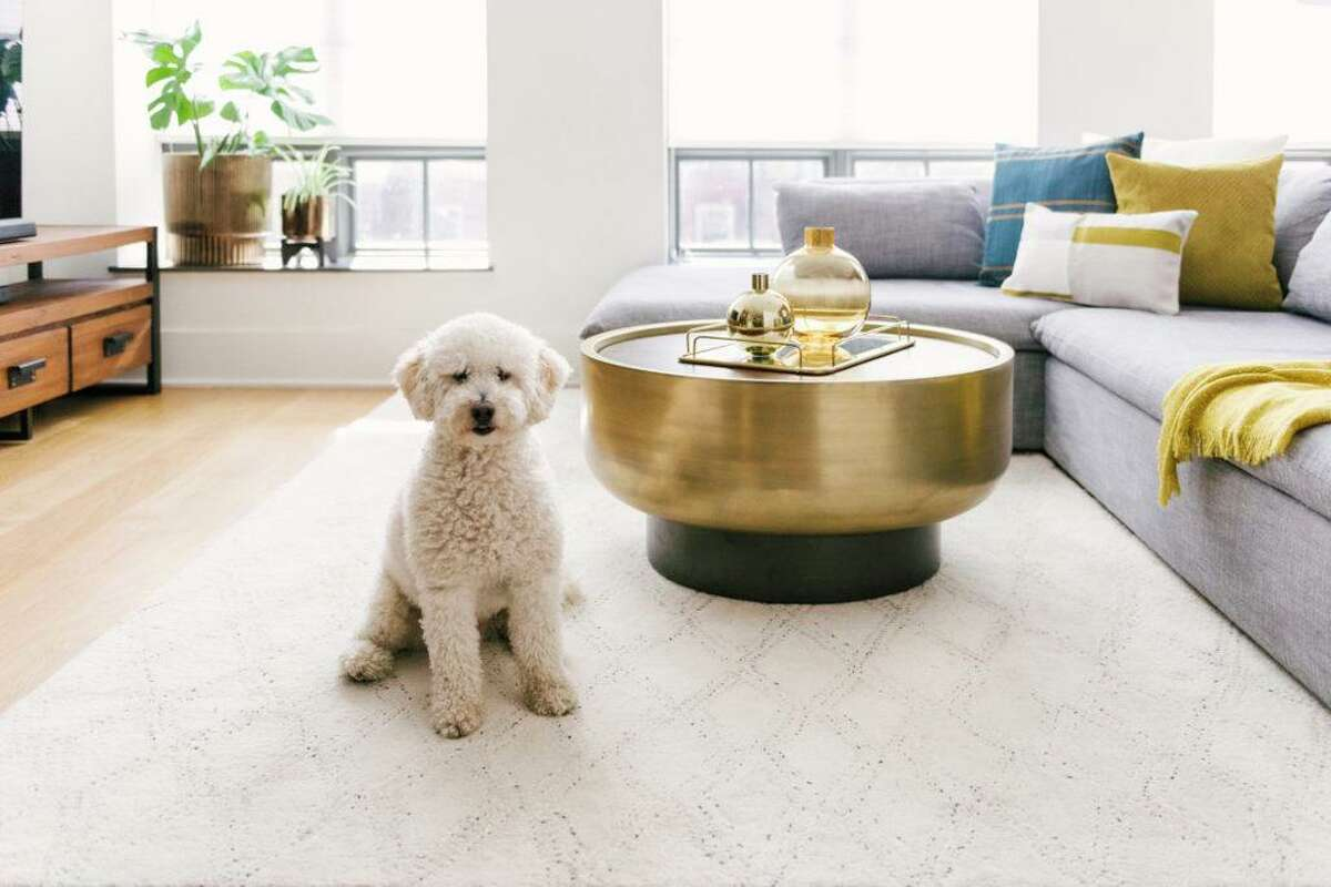 West Elm home good stores are offering free virtual background images for people who are telecommuting and want to look like they live in well-designed homes. This one even comes with a cute labradoodle.