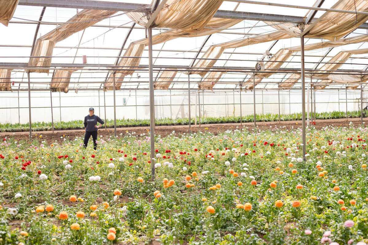Farmgirl Flowers founder Christina Stembel stands in a greenhouse full of life.