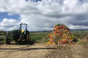 Thousands of Gerber daisies worth $150,000 are destined for disposal at a Watsonville farm.
