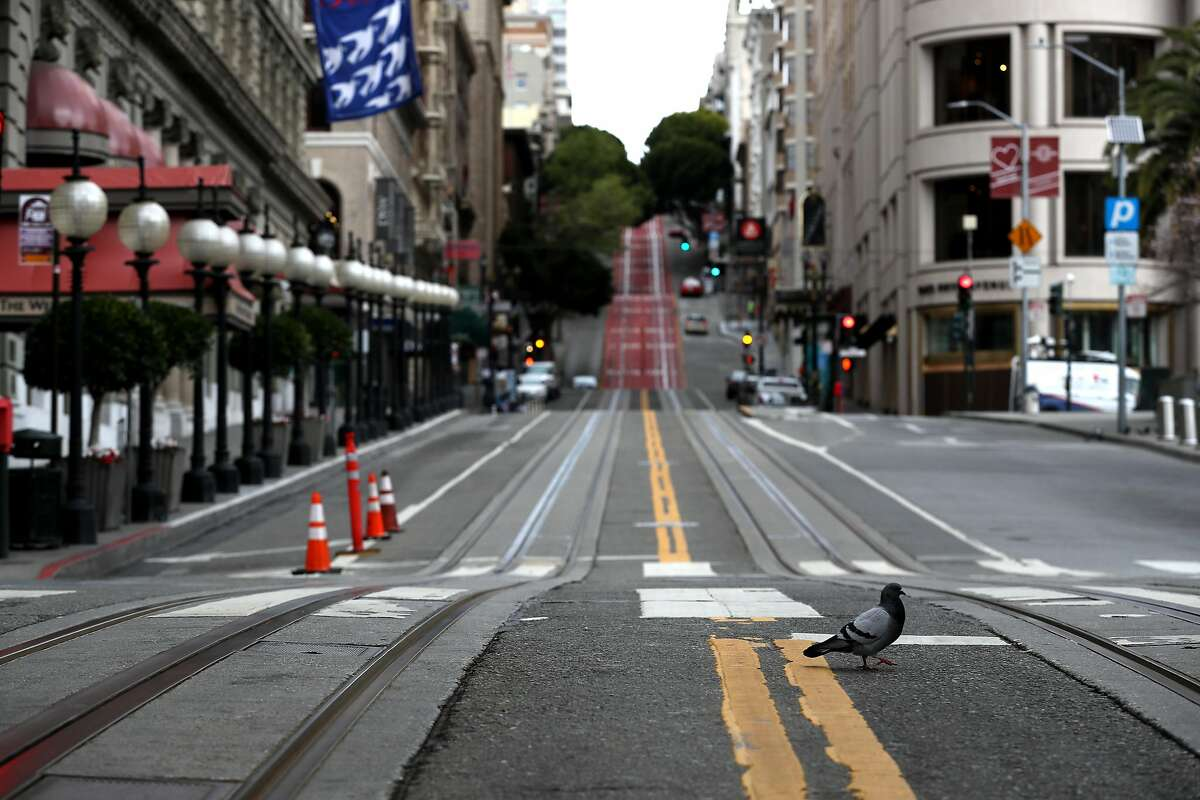 SAN FRANCISCO, CALIFORNIA - MARCH 30: A pigeon crosses an empty Powell Street during the coronavirus pandemic on March 30, 2020 in San Francisco, California. Officials in seven San Francisco Bay Area counties have announced plans to extend the shelter in place order until May 1. (Photo by Justin Sullivan/Getty Images)