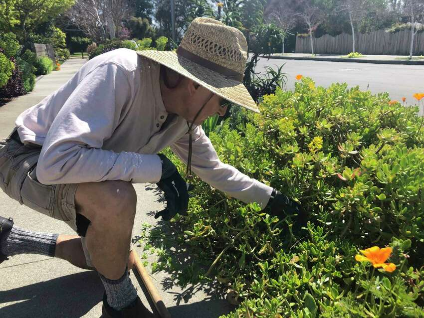 In this march 20, 2020 photo, Larry Friedman weeds his garden in Santa Cruz, Calif. Shelter in place orders to prevent the spread of coronavirus coincided with beautiful weather, and gardeners are using their newfound free time to plant and tend their flowers and vegetables. (AP Photo/Martha Mendoza)