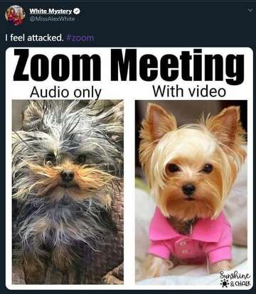 Working from home? You'll relate to these Zoom fails and ...