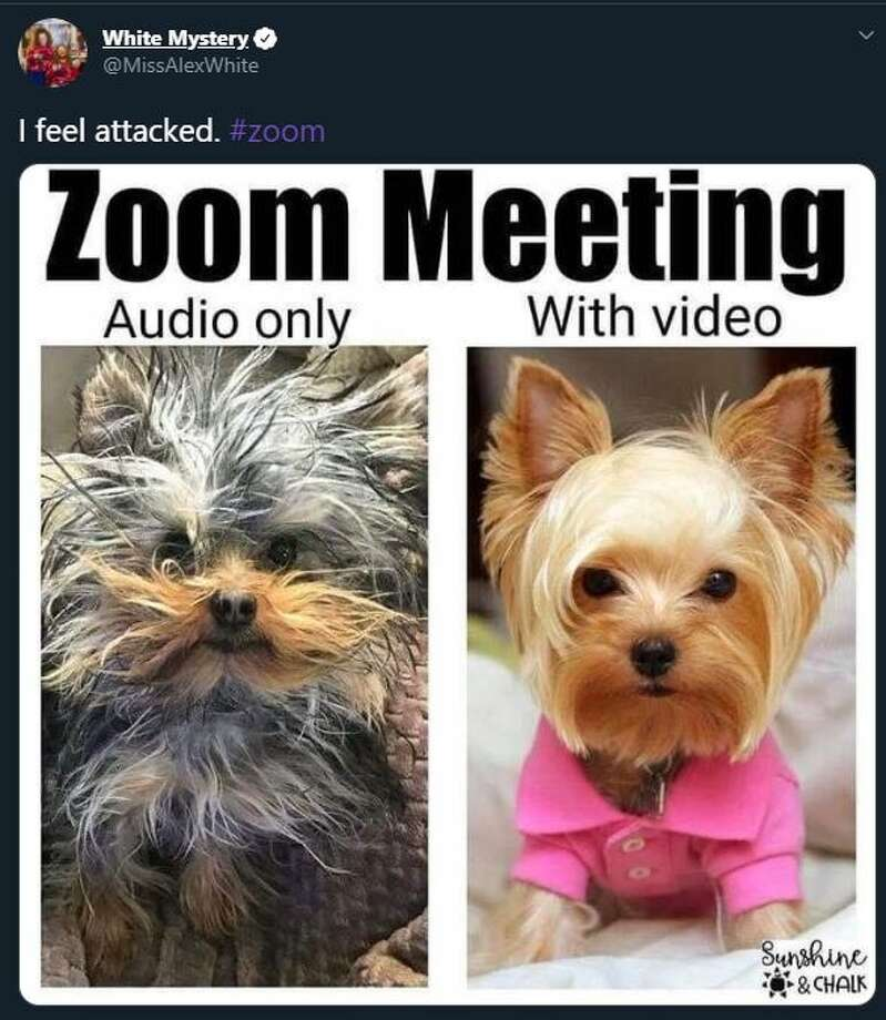 Working From Home You Ll Relate To These Zoom Fails And Memes