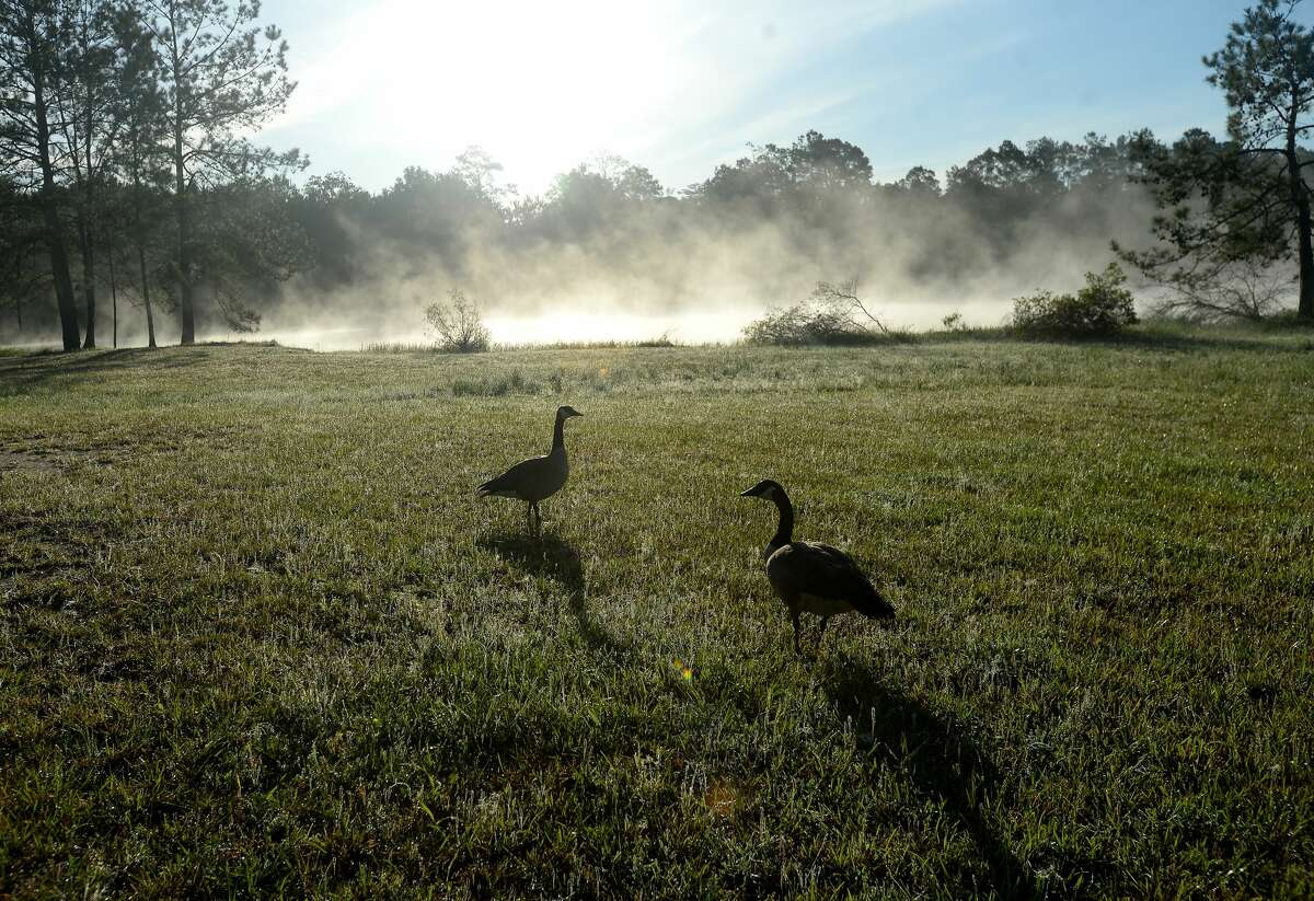 Geese walk among the dewy grass as fog drifts across the water at Paradise RV Resort. With temperatures in the low 50's early Wednesday morning, a dense fog drifted across area waterways amid the rising sun. Photo taken Wednesday, April 1, 2020 Kim Brent/The Enterprise