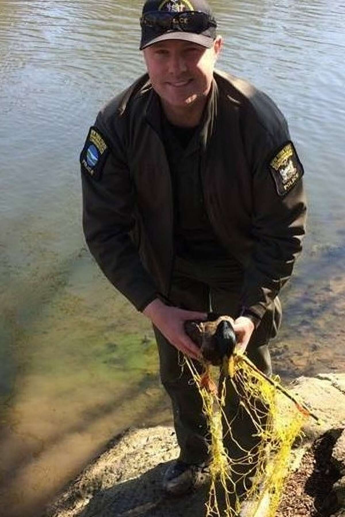 Mallard duck with arrow stuck in it rescued from Albany's Washington Park Lake.