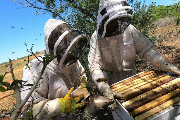 Tracy and George Mapus harvest honey from one of the bee hives at their ranch, La Gorra Azul. The Mapus' grow produce, raise chickens for their eggs for sale at local Farmers Markets and on their website.