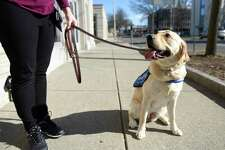 BluePath puppy trainer Lindsey Fahey walks her dog in-training Cece outside Greenwich Library in Greenwich, Conn. Monday, March 9, 2020. Fahey trains dogs to help children with autism, who often experience high-stimulation levels and can benefit from a dog to help them calm down.