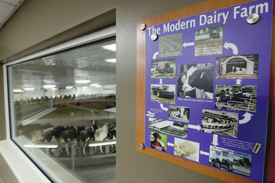 At this dairy, each of the 9,000 cows has a microchip implanted in an ear that workers can scan with smartphones for up-to-the-minute information on how the animal is doing, everything from their nutrition to their health history to their productivity. Photo: Morry Gash | AP