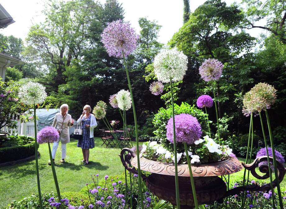 Sandra Visnapuu of Wilton, left, and Kristi Loverde of Atlanta, can be seen through blooming alliums during the annual Grandiflora Garden Tour at the participating home and garden of Sandy Lindh in the Riverside section of Greenwich; Conn; Friday; June 8; 2018. Photo: File / Hearst Connecticut Media / Greenwich Time