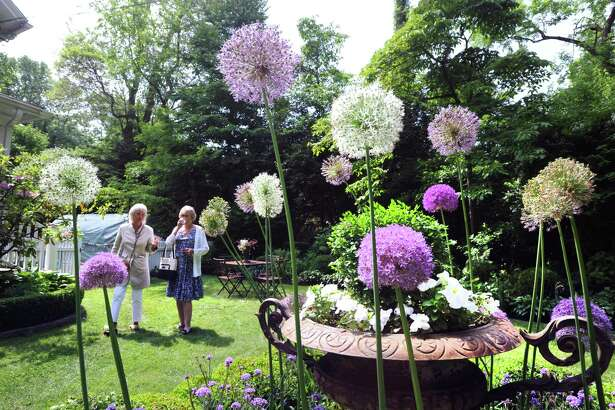 Sandra Visnapuu of Wilton, left, and Kristi Loverde of Atlanta, can be seen through blooming alliums during the annual Grandiflora Garden Tour at the participating home and garden of Sandy Lindh in the Riverside section of Greenwich; Conn; Friday; June 8; 2018.