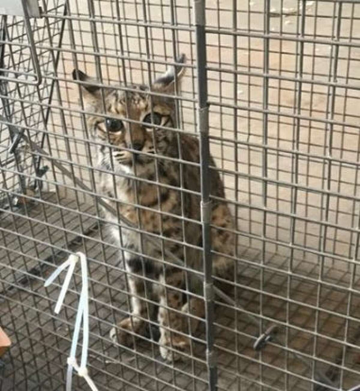 A number of exotic animals were discovered while authorities secured a 5-acre, single-home residence in Mercedes, Texas.