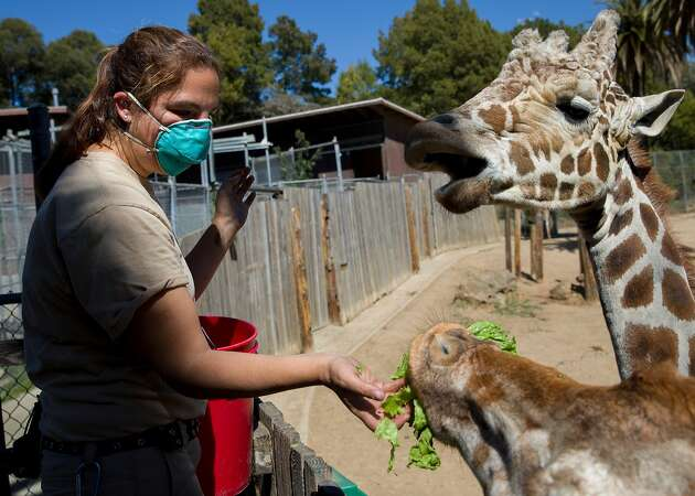 Oakland, San Francisco zoos must close Monday under Bay Area stay-at-home order