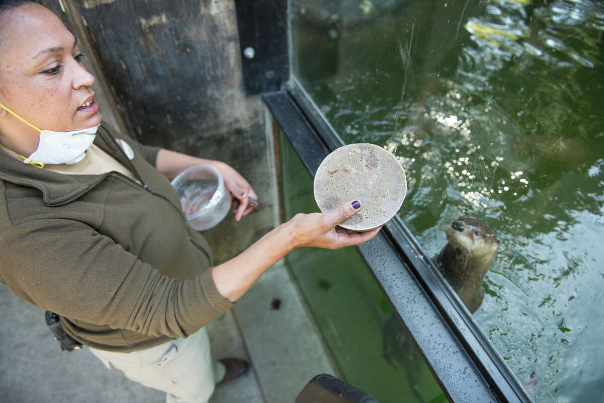 Liz Abraml feeds the otters a mix of herring and crawfish.