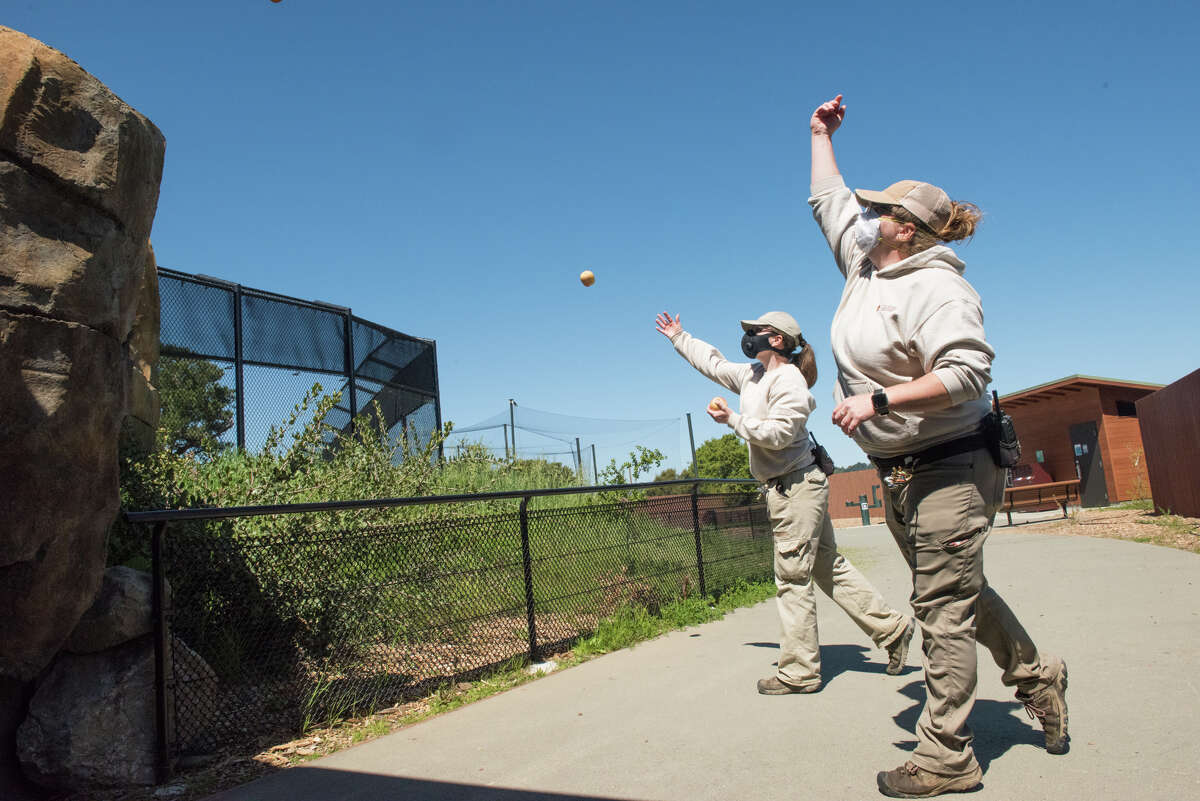 Britney Combs, left, and Erin Melroy, right, throw apples into the bear exhibit.