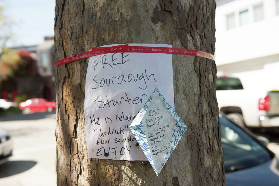 San Francisco residents have found a clever solution around spending the time making their own starter: sharing sourdough starters via common areas around the city. Sourdough starters have been popping up on telephone poles and trees. Photo: Blair Heagerty / SFGate