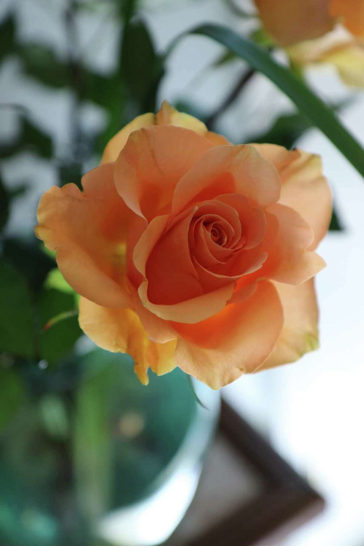 """Ben Marvin of Delmar sends us a """"shot of color"""" a€?"""" a glorious rose from a bouquet his wife received."""