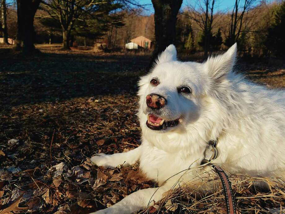 Dogs, like people, want to go out in the spring, but there are some dangers of which pet owners should be cautious. (Colin Merry/Pioneer News Network)