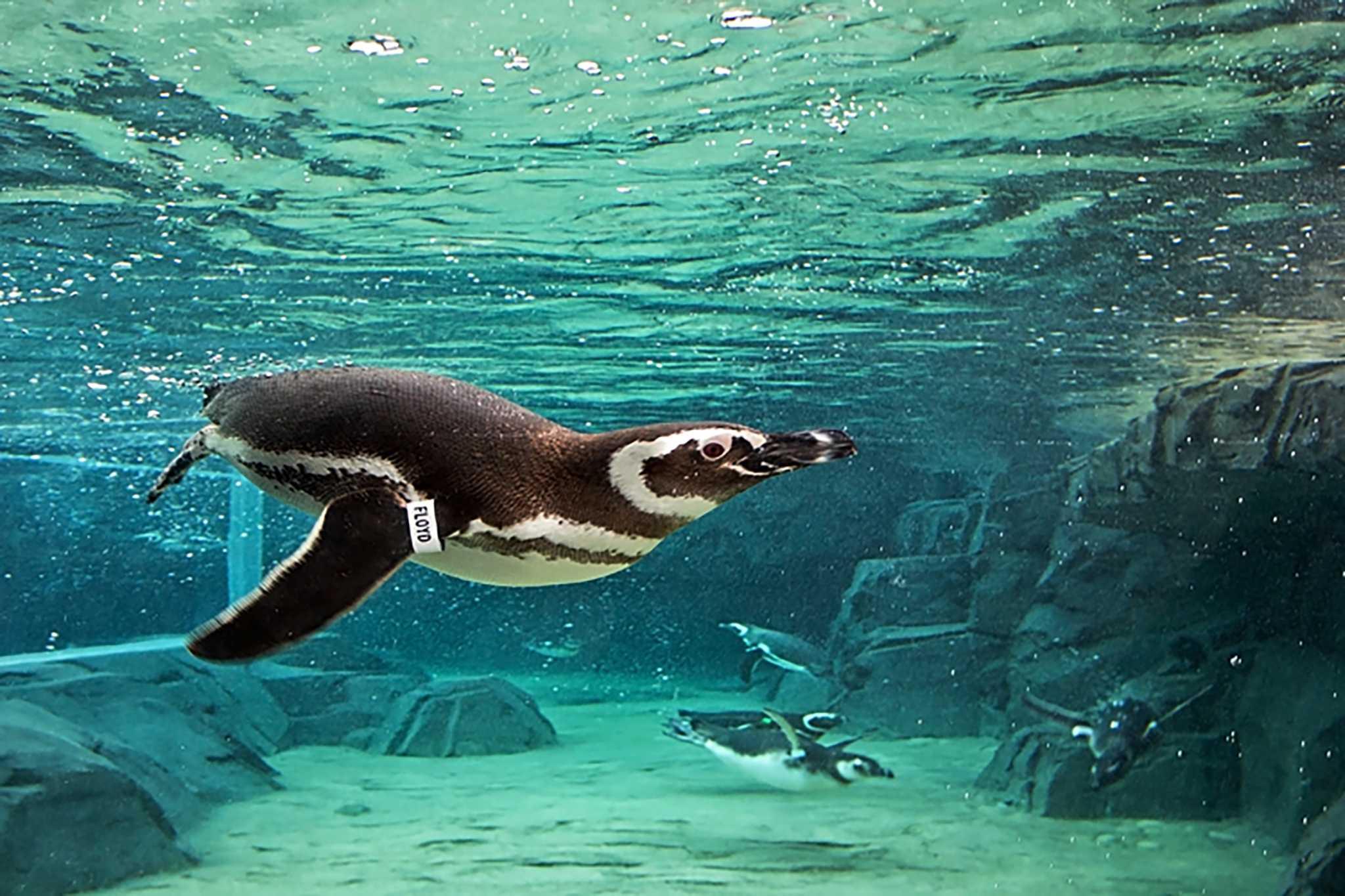 Online aquarium site offers virtual field trips