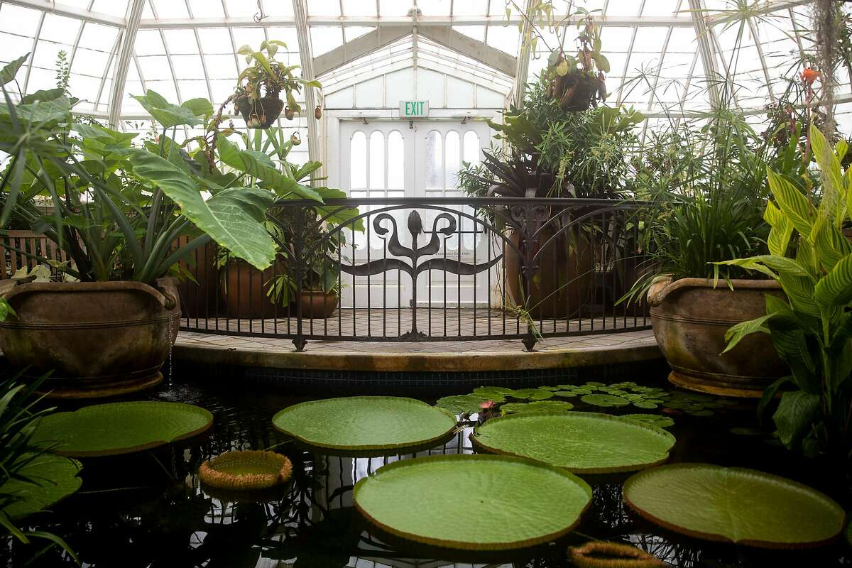A giant water lily floats in a pond at the San Francisco Conservatory of Flowers at Golden Gate Park in April. Low-income families can now visit the conservatory for free.