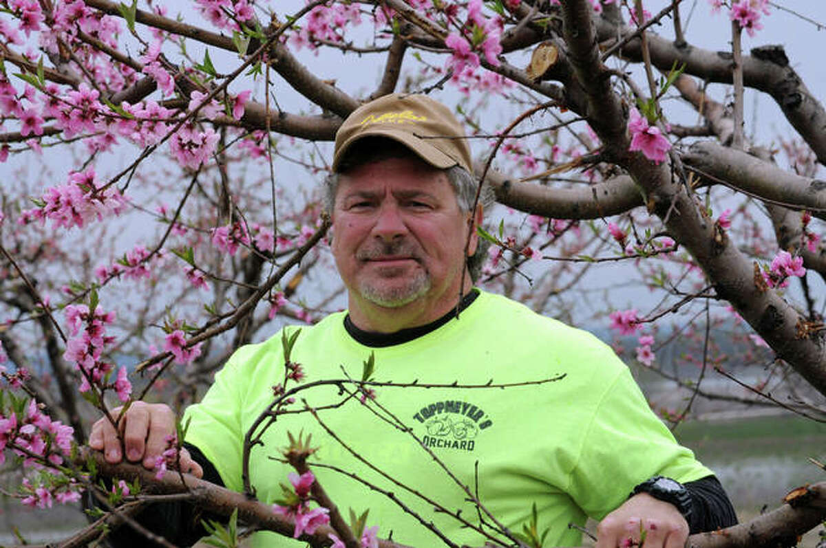 """Alan Toppmeyer of rural Brussels says """"the crop is looking good so far"""" at his Calhoun County peach orchard. Fruit trees are currently blooming, with area orchard owners expecting good harvests this year."""