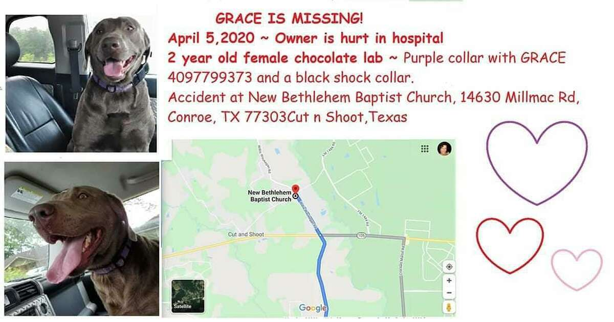 Kristi Hinds posted on social media and missing pet pages that she lost her dog Grace on Saturday after hydroplaning and hitting a tree at New Bethlehem Baptist Church at 14630 Millmac Rd. in Conroe.