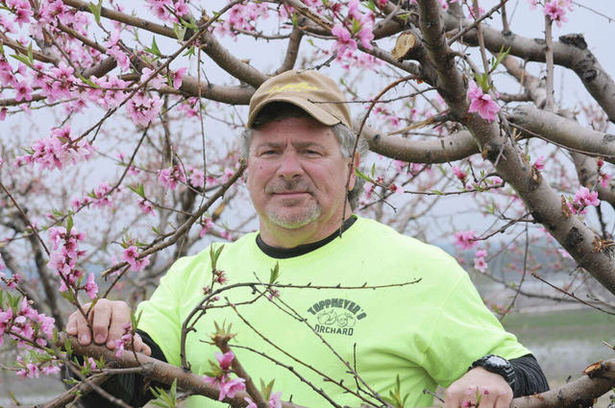 Alan Toppmeyer of rural Brussels says the crop is looking good so far at his Calhoun County peach orchard. Fruit trees are blooming, with orchard owners expecting good harvests this year.