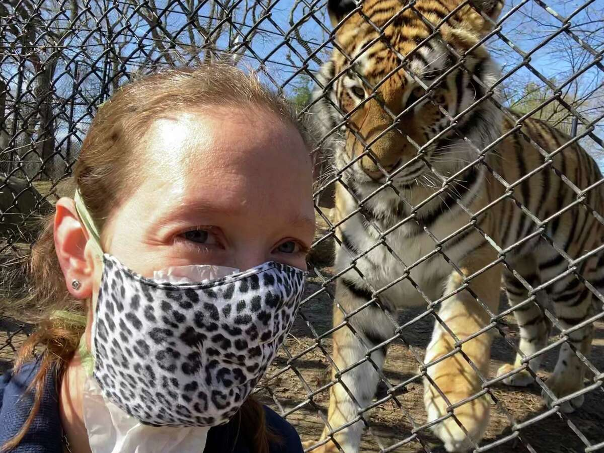 Sandy Hook resident Bethany Thatcher, an animal care specialist at Bridgeport's Beardsley Zoo, is seen with Reka, a 250-pound Amur tiger. Thatcher was checking out Reka's reaction to her mask -- something she wouldn't normally wear. The mask is part of her gear now, one of many changes because of coronavirus concerns.